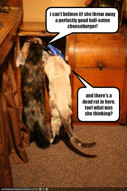Can Behaviour Problems - Cat Can Do Custom In Home Animal ...